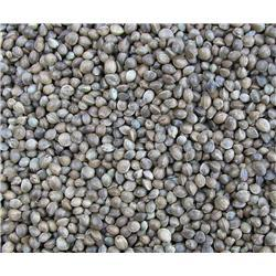 Aldersons Giant Hemp 600gm