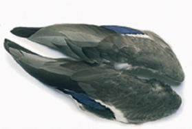 Veniard Mallard Whole Wings Pair