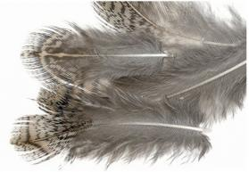 Veniard English Partridge Brown Back Hackles