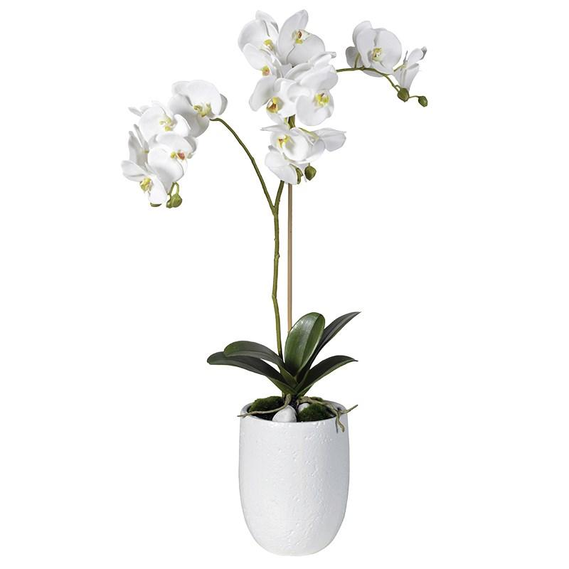 Artificial Flowers Amp Plants Bathroom Ceiling Lighting Clocks Edge Collection Furniture