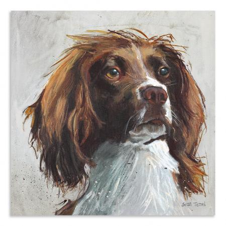 Small Springer Spaniel Boxed Canvas Picture