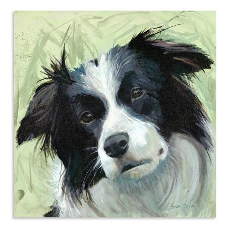 Small Collie Boxed Canvas Picture