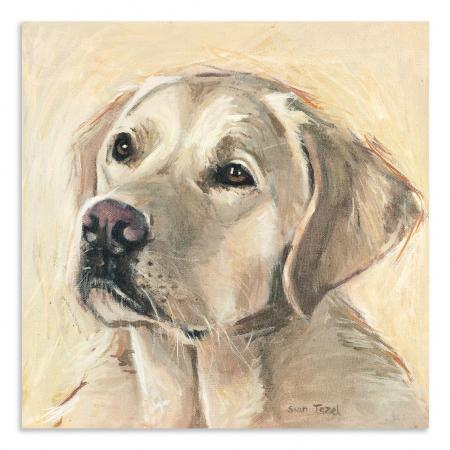 Small Golden Labrador Boxed Canvas Picture